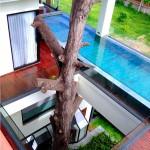 ความแปลกที่มีต้นไม้ใหญ่ ที่เรียกว่า แม่พยอม ที่อยู่กลางห้อง ทำให้สัมผัสถึงความรักธรรมชาติสุดๆ